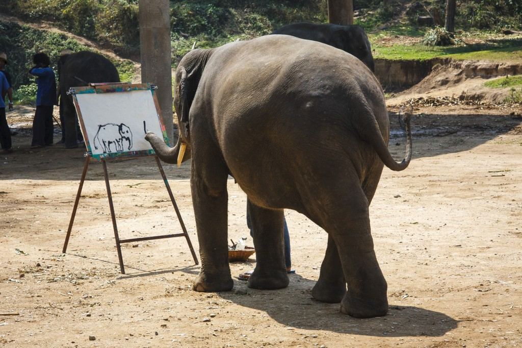 Elephant self portrait