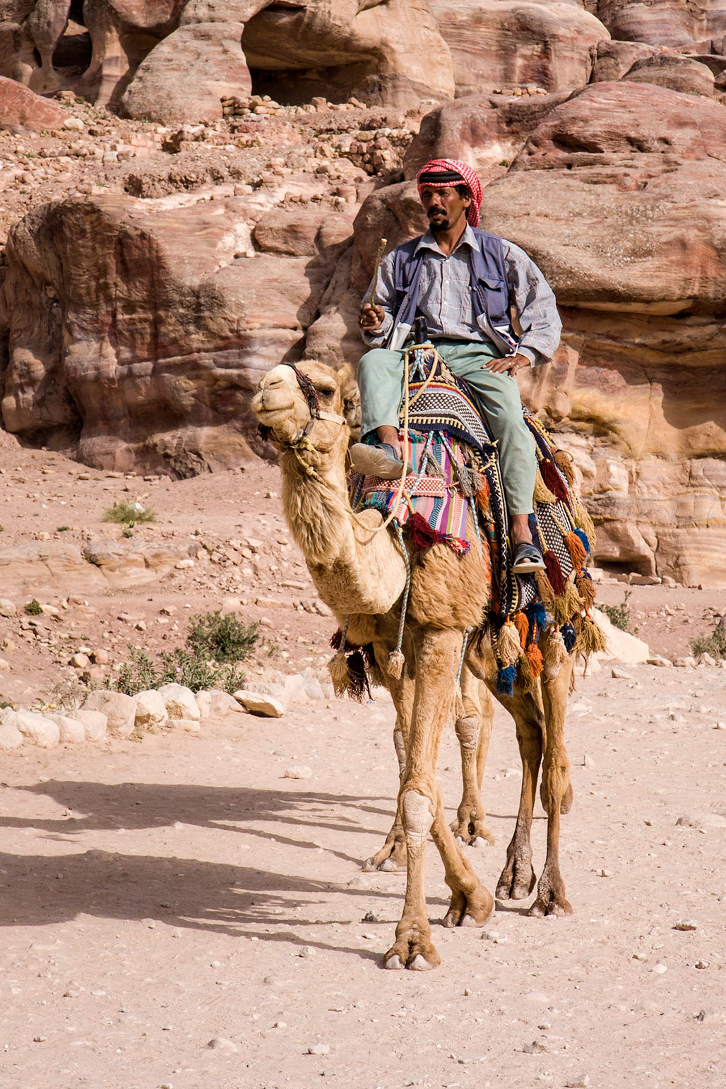 Camel Rider in Petra