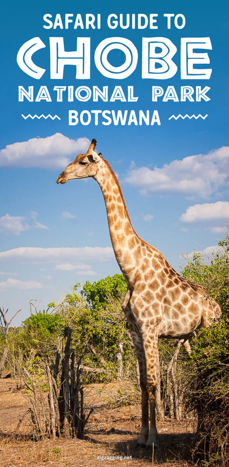 Botswana Safari in Chobe National Park