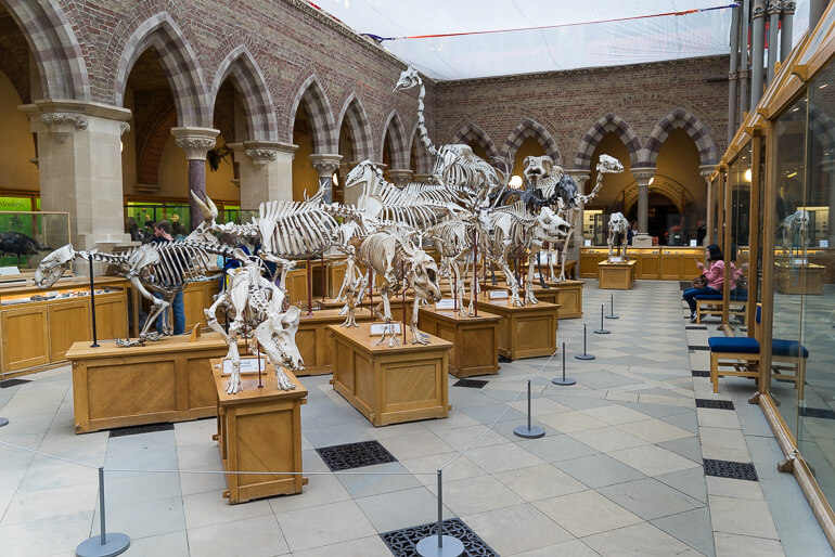 Museum of Natural History in Oxford, England